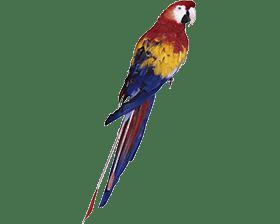 Бесплатные объявления - Птицы