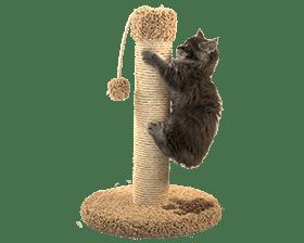 Бесплатные объявления - Кошки